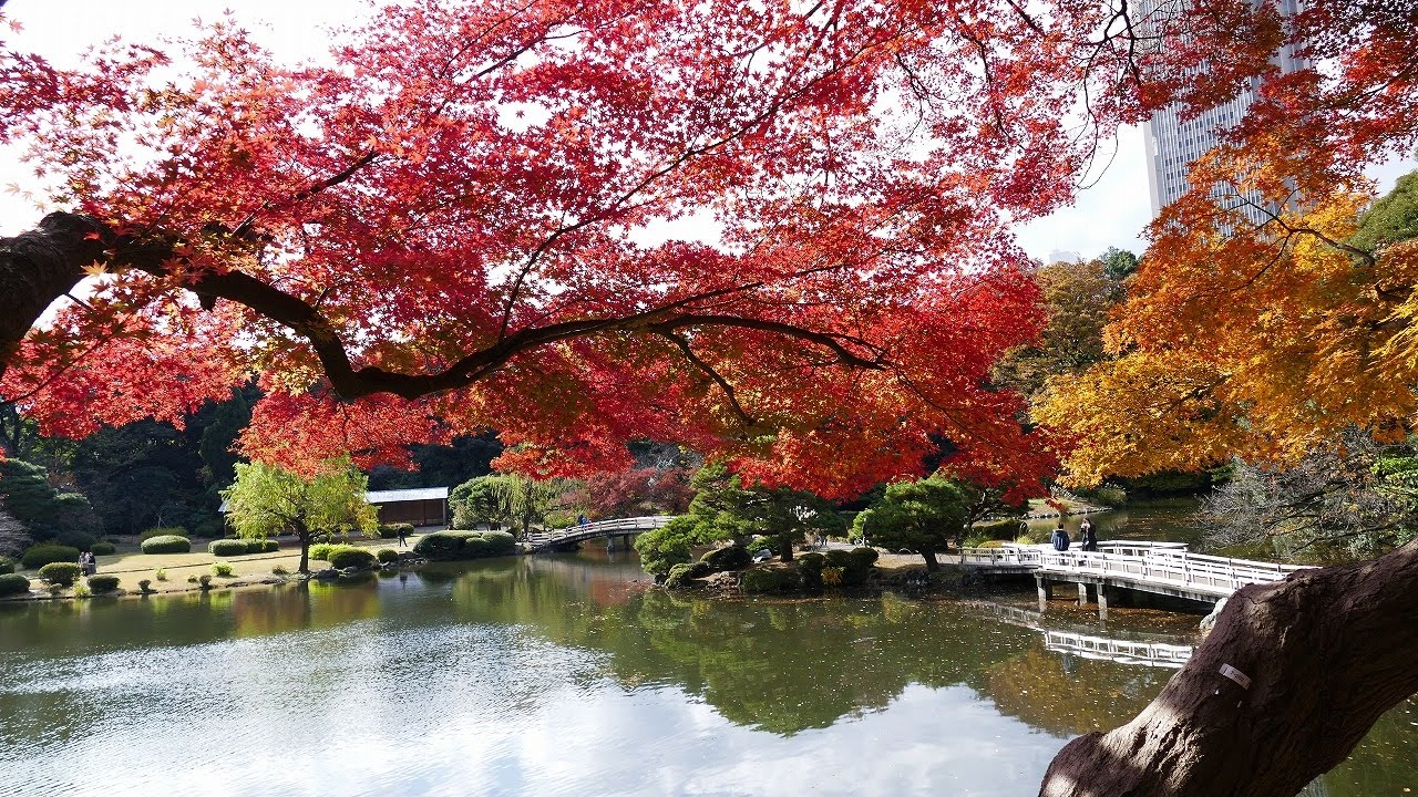 autumn japan about All in