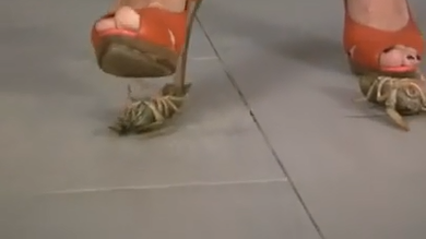 japan insect Crushing fetish